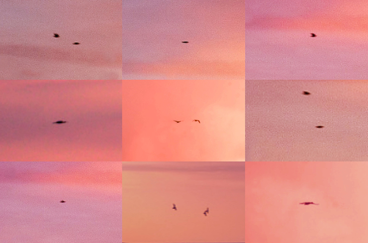 Penelope Umbrico - Suns from Sunsets from Flikr - Out- takes/Birds (Pink)