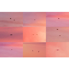 Penelope Umbrico Suns from Sunsets from Flikr - Out- takes/Birds (Pink)