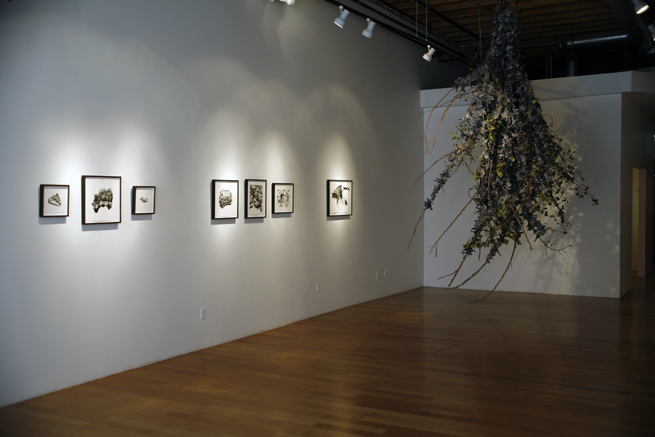 Christina Empedocles - CE Installation View 1
